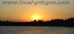 Local-gringos copyrighted logo