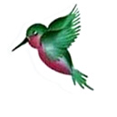 our hummingbird logo